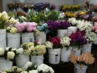 Halls Florist